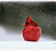 A Ruby In The Snow by Lois  Bryan