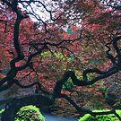 Oregon - Japanese Gardens, Portland by Robert Baker