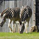 Zebra Pair by WildestArt