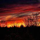 Elkland Township Sunset by Penny Rinker