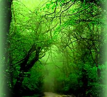 Misty Morning in the Forest by Charmiene Maxwell-batten
