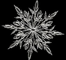 Crystal snowflake  by franceslewis