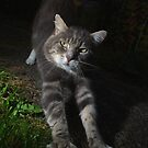 Tabby cat stretching at night by turniptowers