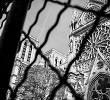 Peering Through To Notre Dame by Pixelglo Photography