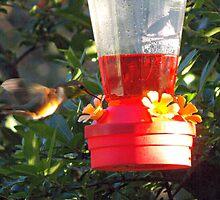 Humming Bird by Farrah Weston
