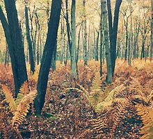 Autumn Woodland and Ferns by Olivia Joy StClaire