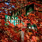 Fall Walk in my Neighborhood - Street Sign by ctheworld