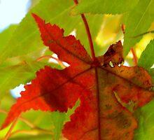 Fall Walk in my Neighborhood -CloseUp     ^ by ctheworld