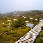 The Overland Track Cradle Mountain. by Nick Griffin