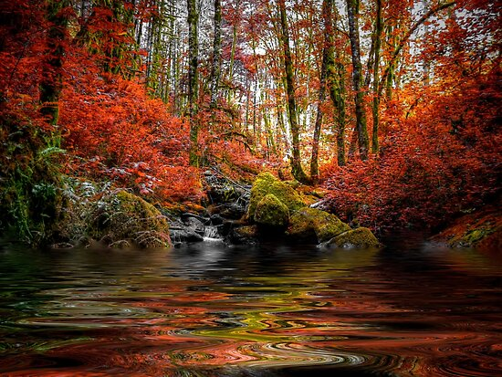 Just Drem Along ~ Fall Colors ~ by Charles & Patricia   Harkins ~ Picture Oregon