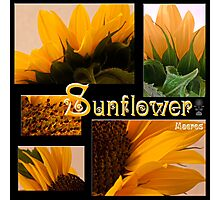 Sunflower Macro Collage Scrapbook Page Photographic Print