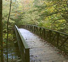 A Beautiful Bridge by Asoka