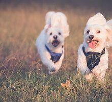 Puppy Fun by Jennie Gardiner