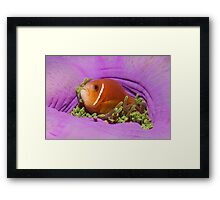 Closed up! Framed Print