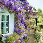 Wisteria Welcome Impressions 2 by Susie Peek
