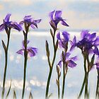 Irises By The Sea Impressions by Susie Peek
