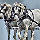 A Team Of Horse's by Carla Jensen