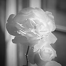 Pink rose - HDR, Neutral Density, Sharpened too! by Jan Clarke