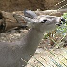 Deer by Ingasi