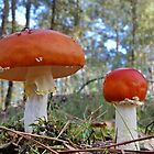 Fly Agarics by relayer51