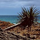 Horizontal Pandanus Tree by myraj