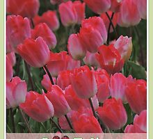 I LOVE TULIPS by Rose Frankcombe