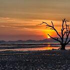 Dead tree sunrise by Kevin Hellon