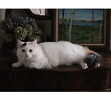 Kitty cat modelling Photographic Print