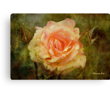 Damaged ~ a Rose with a Message Canvas Print