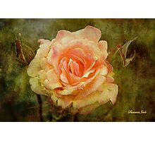 Damaged ~ a Rose with a Message Photographic Print