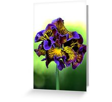 Shades of Frilly Pansy Greeting Card
