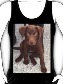 Meet Cookie 14 months old Choc Lab,,,,,,,, T-Shirt