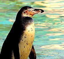 Humboldt Penguin 2  by Barnbk02