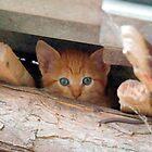 ginger kitten by milena boeva