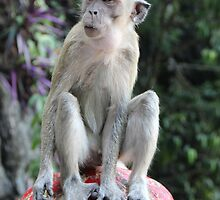 Contemplative Monkey II - Batu Caves, Malaysia. by Tiffany Lenoir