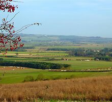 Up on the Yorkshire Wolds by Sue Gurney