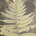 Autumn Fern by Bethany Helzer