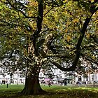 Cathedral Square ~ Exeter by Susie Peek