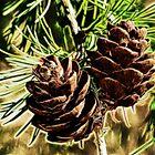 Cones by Tracy Deptuck
