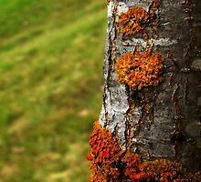 I'm lichen this by myraj