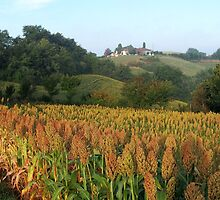 Sorghum country by Duncan Cunningham
