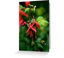 Wild Fuchsia at Loch Na Fooey (tall) Greeting Card
