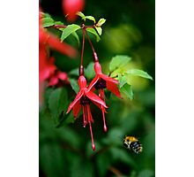 Wild Fuchsia at Loch Na Fooey (tall) Photographic Print