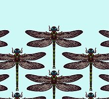 dragonfly by Sharon Turner