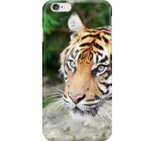 Female Sumatran Tiger iPhone Case/Skin