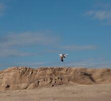 Flying seagull by SammyPhoto
