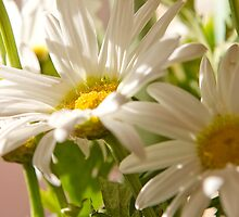 White Daisies by Susan See