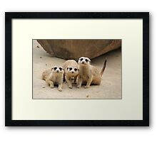 Our Cuteness Comes In A Package Deal, 3 For 1! Framed Print