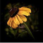 Autumn Treasure by Victoria Jostes