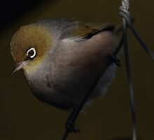 Bird on a wire by Geoff Soper